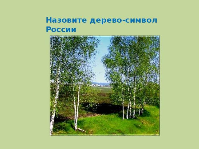 Назовите дерево-символ России