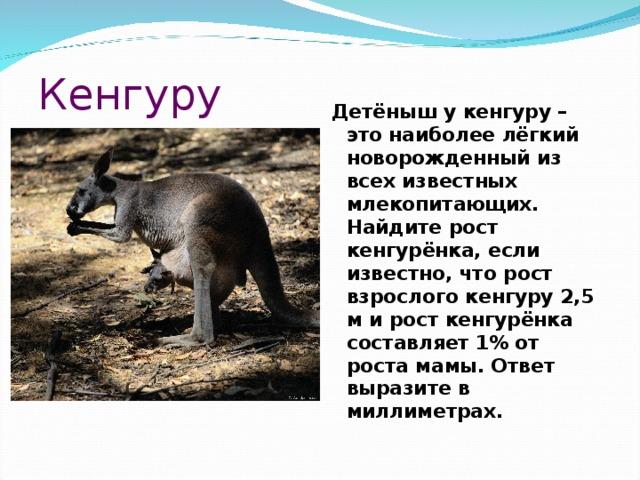 Кенгуру Детёныш у кенгуру – это наиболее лёгкий новорожденный из всех известных млекопитающих. Найдите рост кенгурёнка, если известно, что рост взрослого кенгуру 2,5 м и рост кенгурёнка составляет 1% от роста мамы. Ответ выразите в миллиметрах.