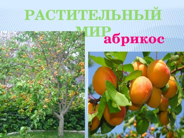 Растительный мир абрикос