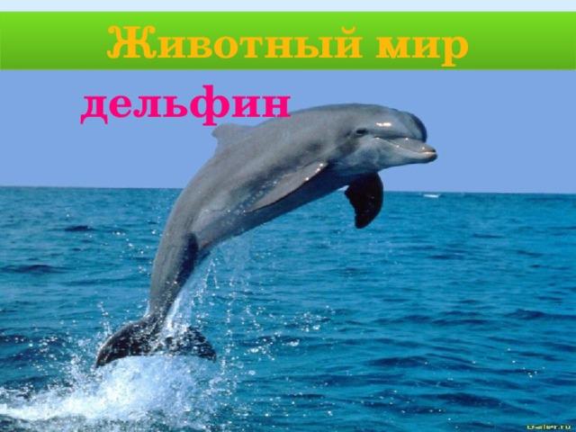 Животный мир дельфин