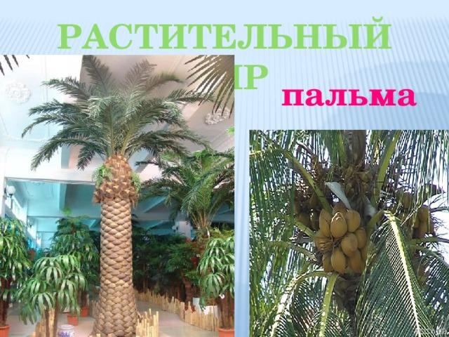 Растительный мир пальма