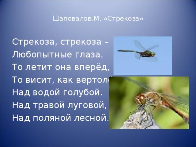 Шаповалов.М. «Стрекоза» Стрекоза, стрекоза – Любопытные глаза. То летит она вперёд, То висит, как вертолёт, Над водой голубой. Над травой луговой, Над поляной лесной…