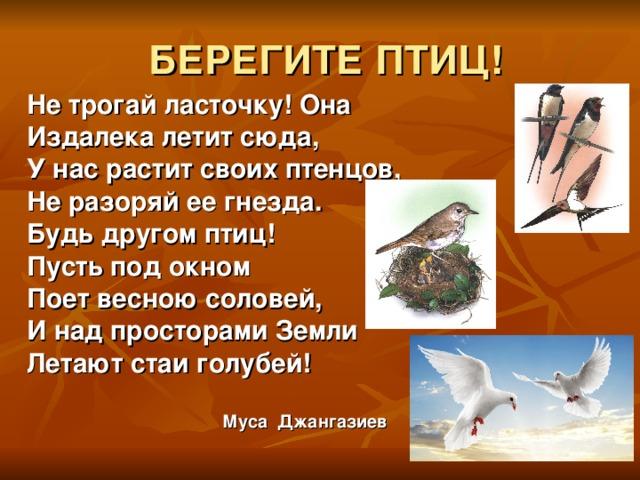 БЕРЕГИТЕ ПТИЦ! Не трогай ласточку! Она Издалека летит сюда, У нас растит своих птенцов, Не разоряй ее гнезда. Будь другом птиц! Пусть под окном Поет весною соловей, И над просторами Земли Летают стаи голубей!   Муса Джангазиев