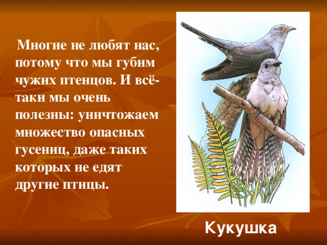 Многие не любят нас, потому что мы губим чужих птенцов. И всё-таки мы очень полезны: уничтожаем множество опасных гусениц, даже таких которых не едят другие птицы. Кукушка