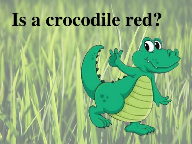 Is a crocodile red ?