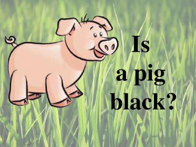 Is  a pig  black ?