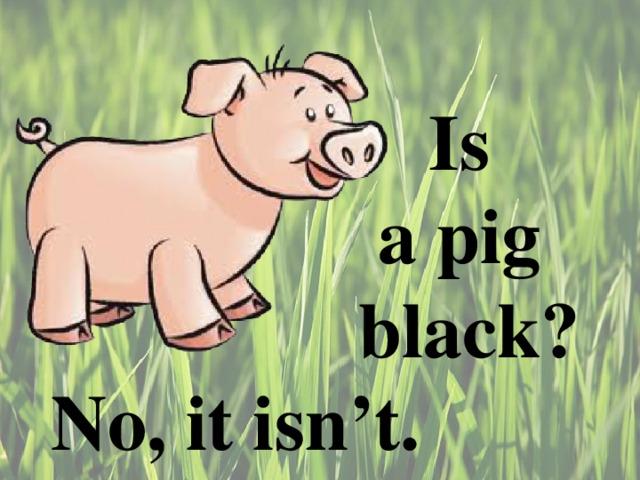 Is  a pig  black ? No, it isn't.