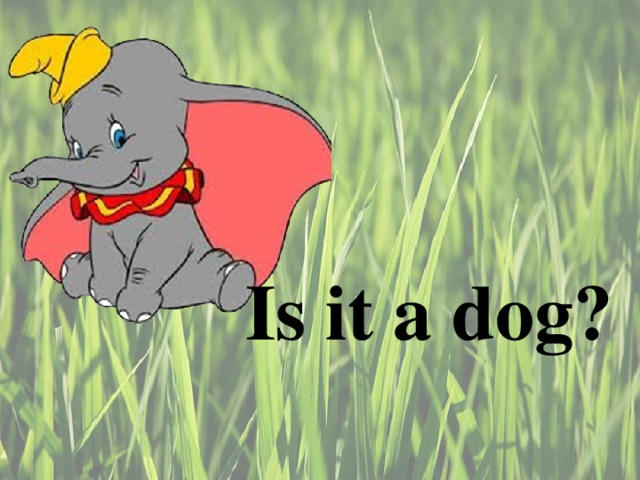 Is it a dog ?