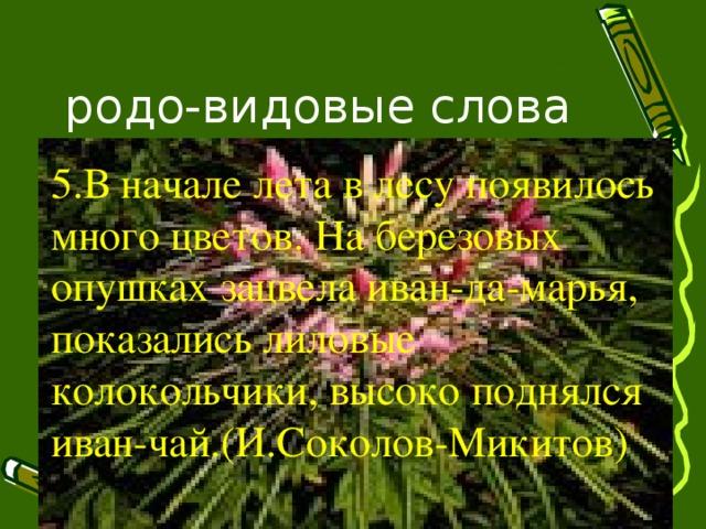 родо-видовые слова 5.В начале лета в лесу появилось много цветов. На березовых опушках зацвела иван-да-марья, показались лиловые колокольчики, высоко поднялся иван-чай.(И.Соколов-Микитов)