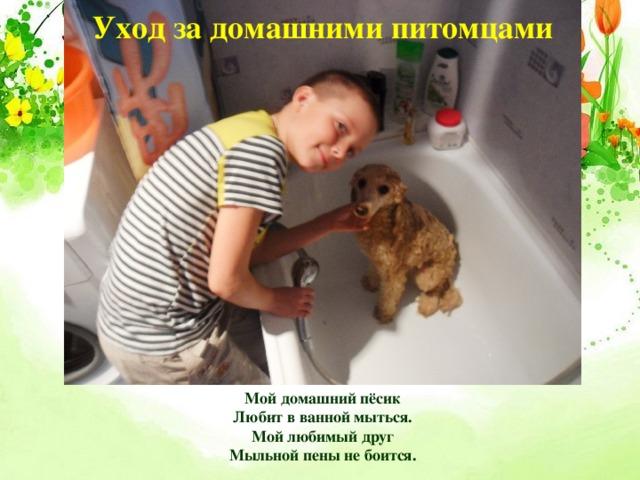Уход за домашними питомцами Мой домашний пёсик  Любит в ванной мыться.  Мой любимый друг  Мыльной пены не боится.