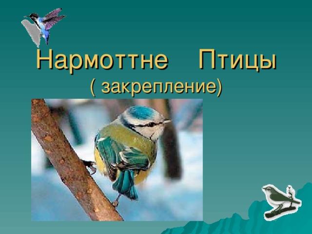 Нармоттне Птицы  ( закрепление)