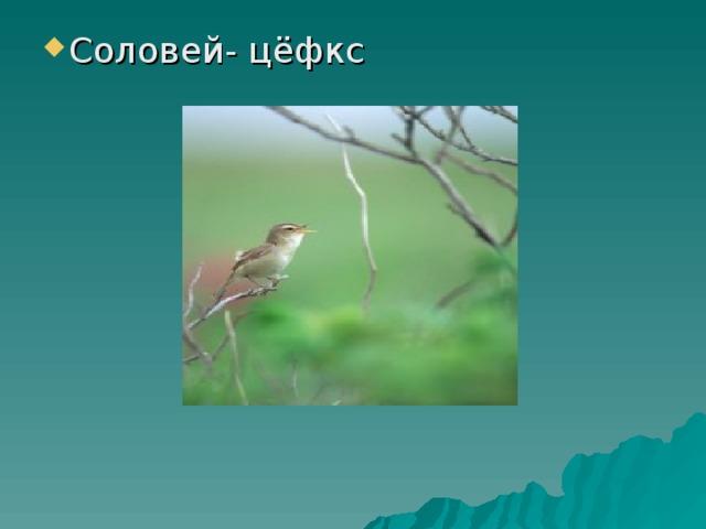 Соловей- цёфкс