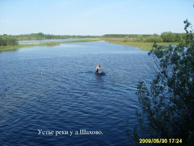 Устье реки у д.Шахово. Устье реки у д.Шахово .