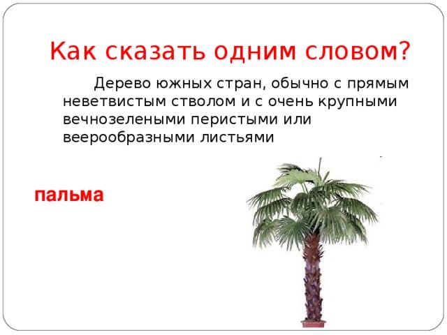Как сказать одним словом?   Дерево южных стран, обычно с прямым неветвистым стволом и с очень крупными вечнозелеными перистыми или веерообразными листьями пальма