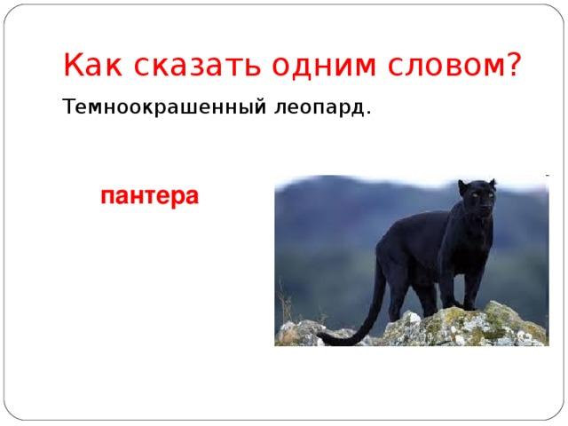 Как сказать одним словом? Темноокрашенный леопард. пантера