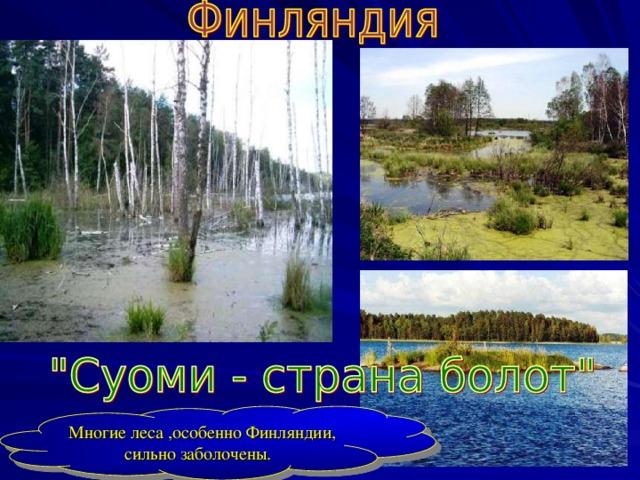 Многие леса , особенно Финляндии , сильно заболочены.