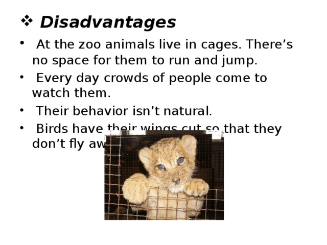 Disadvantages  At the zoo animals live in cages. There's no space for them to run and jump.  Every day crowds of people come to watch them.  Their behavior isn't natural.  Birds have their wings cut so that they don't fly away.