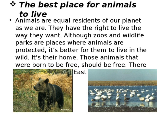 """The best place for animals to live Animals are equal residents of our planet as we are. They have the right to live the way they want. Although zoos and wildlife parks are places where animals are protected, it's better for them to live in the wild. It's their home. Those animals that were born to be free, should be free. There is a nice proverb: """"East or West- home is best"""""""