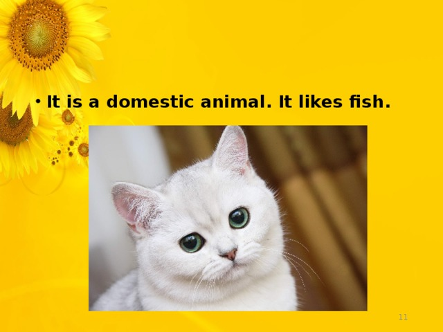 It is a domestic animal. It likes fish.
