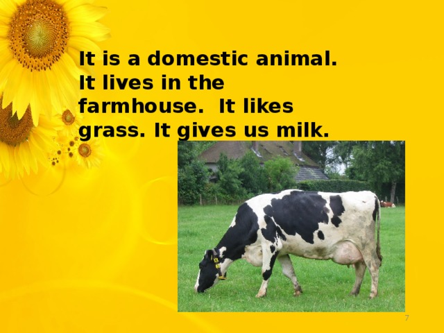 It is a domestic animal. It lives in the farmhouse. It likes grass. It gives us milk.