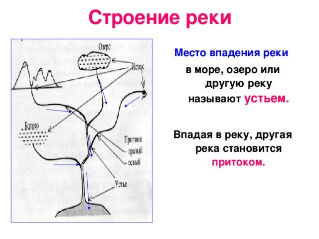 Строение реки Место впадения реки  в море, озеро или другую реку называют устьем.  Впадая в реку, другая река становится притоком.