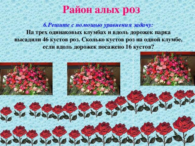 Район алых роз 6.Решите с помощью уравнения задачу:  На трех одинаковых клумбах и вдоль дорожек парка высадили 46 кустов роз. Сколько кустов роз на одной клумбе, если вдоль дорожек посажено 16 кустов?