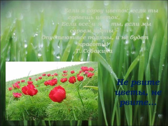 Если я сорву цветок, если ты сорвешь цветок,  Если все: и я, и ты, если мы сорвем цветы –  Опустеют все поляны, и не будет красоты!  Т. Собакина   Не рвите цветы, не рвите…