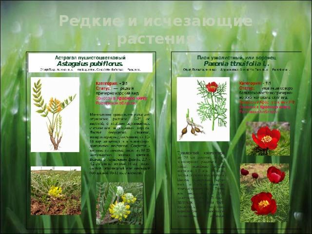 Редкие и исчезающие растения