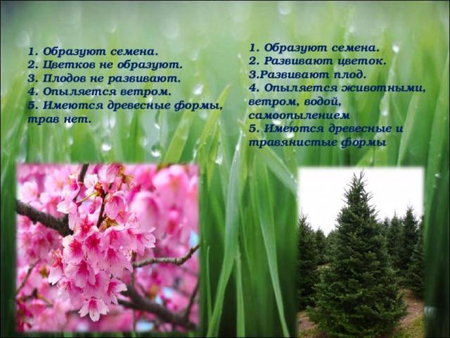 1. Образуют семена. 2. Развивают цветок. 3.Развивают плод. 4. Опыляется животными, ветром, водой, самоопылением 5. Имеются древесные и травянистые формы 1. Образуют семена. 2. Цветков не образуют. 3. Плодов не развивают. 4. Опыляется ветром. 5. Имеются древесные формы, трав нет.