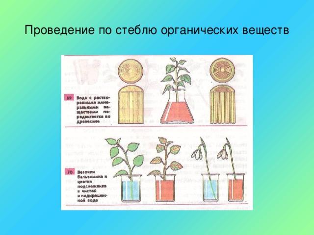 Проведение по стеблю органических веществ