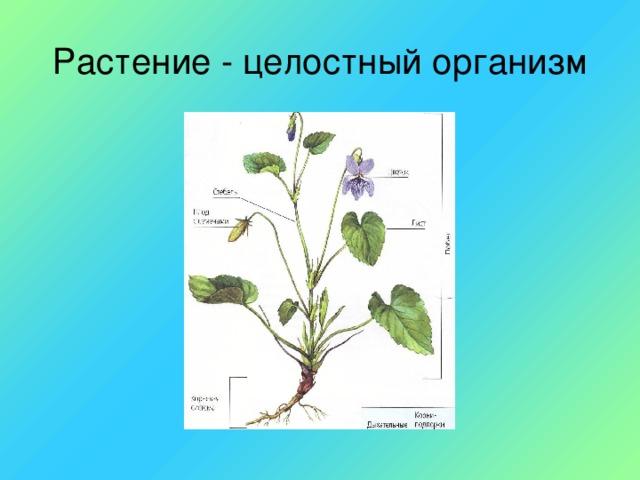 Растение - целостный организм