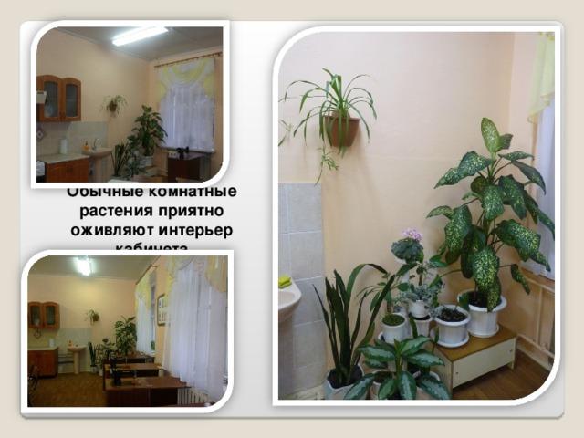 Обычные комнатные растения приятно оживляют интерьер кабинета