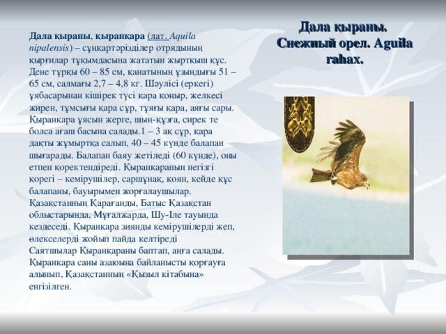 Дала қыраны.  Снежный орел. Aguila rahax. Дала қыраны , қыранқара (лат. Aquila nipalensis ) –сұңқартәрізділеротрядының қырғилар тұқымдасына жататын жыртқыш құс. Дене тұрқы 60 – 85 см, қанатының ұзындығы 51 – 65 см, салмағы 2,7 – 4,8 кг. Шәулісі (еркегі) ұябасарынан кішірек түсі қара қоңыр, желкесі жирен, тұмсығы қара сұр, тұяғы қара, аяғы сары. Қыранқара ұясын жерге, шың-құзға, сирек те болса ағаш басына салады.1 – 3 ақ сұр, қара дақты жұмыртқа салып, 40 – 45 күнде балапан шығарады. Балапан баяу жетіледі (60 күнде), оны етпен қоректендіреді. Қыранқараның негізгі қорегі – кемірушілер, саршұнақ, қоян, кейде құс балапаны, бауырымен жорғалаушылар. ҚазақстанныңҚарағанды, Батыс Қазақстан облыстарында, Мұғалжарда,Шу-Ілетауында кездеседі. Қыранқара зиянды кемірушілерді жеп, өлекселерді жойып пайда келтіреді СаятшыларҚыранқараны баптап, аңға салады. Қыранқара саны азаюына байланысты қорғауға алынып, Қазақстанның «Қызыл кітабына» енгізілген.