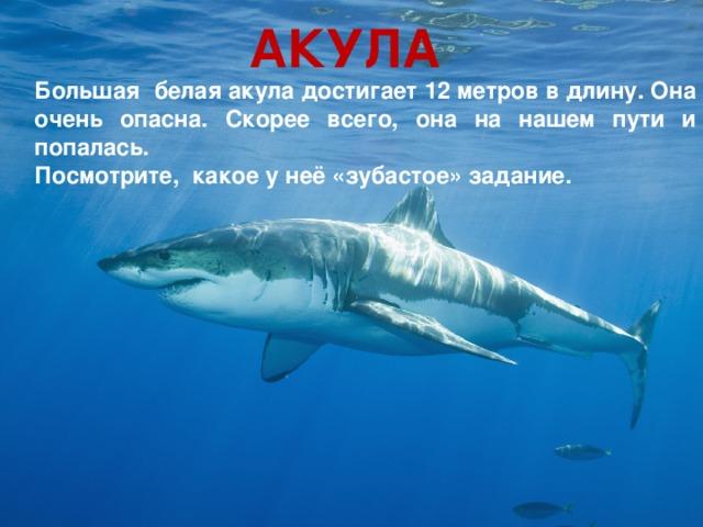 АКУЛА Большая белая акула достигает 12 метров в длину. Она очень опасна. Скорее всего, она на нашем пути и попалась. Посмотрите, какое у неё «зубастое» задание.
