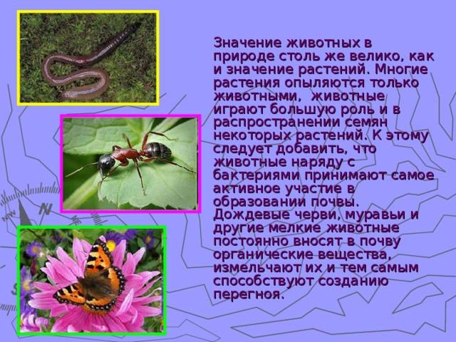 Реферат значение животных в жизни человека 9827
