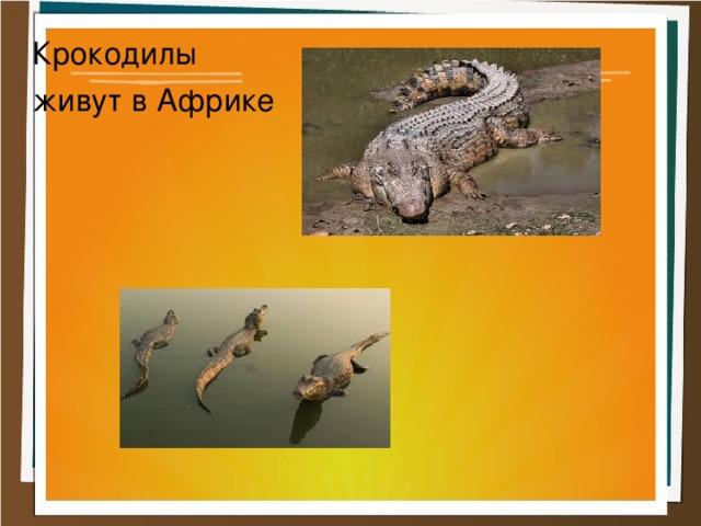 Крокодилы живут в Африке