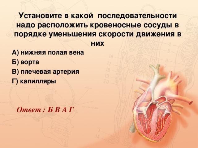 Установите в какой последовательности надо расположить кровеносные сосуды в порядке уменьшения скорости движения в них А) нижняя полая вена Б) аорта В) плечевая артерия Г) капилляры  Ответ : Б В А Г