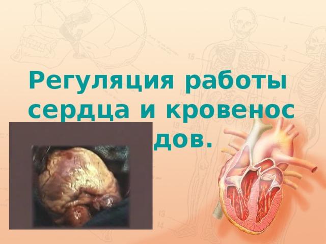 Регуляция работы сердца и кровеносных сосудов.