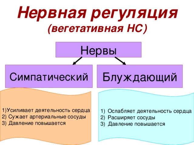 Нервная регуляция  (вегетативная НС) Нервы Симпатический Блуждающий 1)Усиливает деятельность сердца 2) Сужает артериальные сосуды 3) Давление повышается