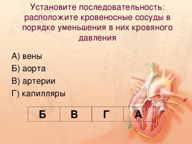 Установите последовательность: расположите кровеносные сосуды в порядке уменьшения в них кровяного давления   Б В Г А