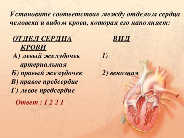 Установите соответствие между отделом сердца человека и видом крови, которая его наполняет:  ОТДЕЛ СЕРДЦА  ВИД КРОВИ  А) левый желудочек 1) артериальная Б) правый желудочек 2) венозная В) правое предсердие Г) левое предсердие Ответ : 1 2 2 1