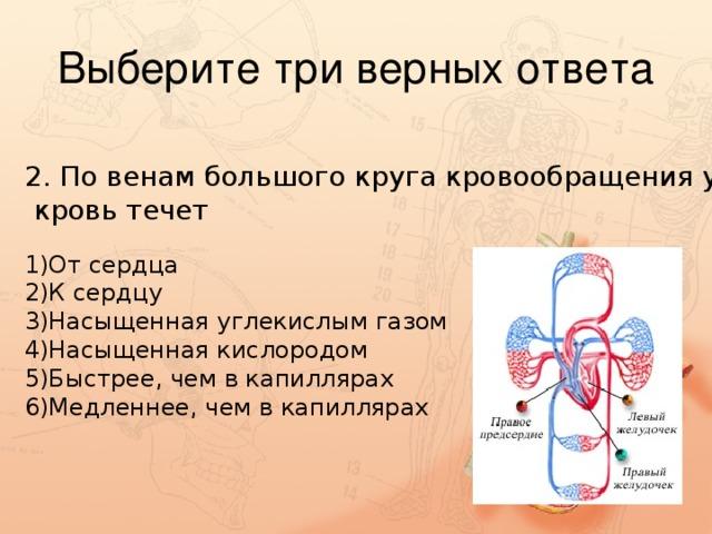 2. По венам большого круга кровообращения у человека  кровь течет