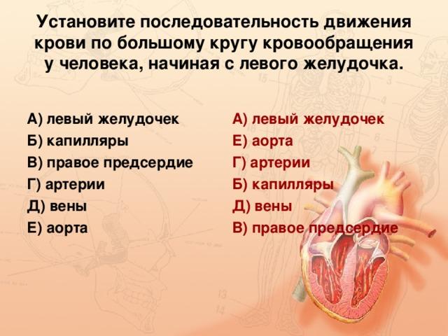 Установите последовательность движения крови по большому кругу кровообращения у человека, начиная с левого желудочка. А) левый желудочек Б) капилляры В) правое предсердие Г) артерии Д) вены Е) аорта А) левый желудочек Е) аорта Г) артерии Б) капилляры Д) вены В) правое предсердие