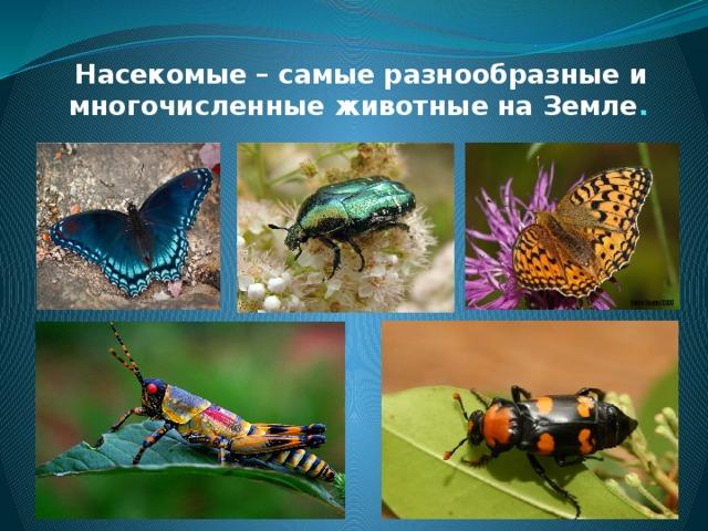 Насекомые – самые разнообразные и многочисленные животные на Земле .
