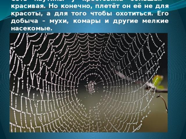 Сеть паутины у крестовика большая красивая. Но конечно, плетёт он её не для красоты, а для того чтобы охотиться. Его добыча – мухи, комары и другие мелкие насекомые.