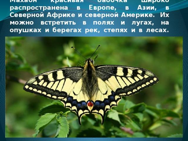 Махаон красивая бабочка широко распространена в Европе, в Азии, в Северной Африке и северной Америке. Их можно встретить в полях и лугах, на опушках и берегах рек, степях и в лесах.