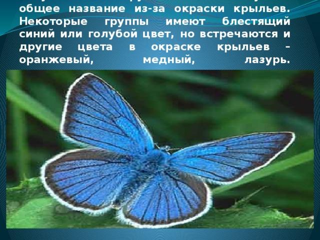 Голубянка. Эта группа бабочек получила общее название из-за окраски крыльев. Некоторые группы имеют блестящий синий или голубой цвет, но встречаются и другие цвета в окраске крыльев – оранжевый, медный, лазурь.