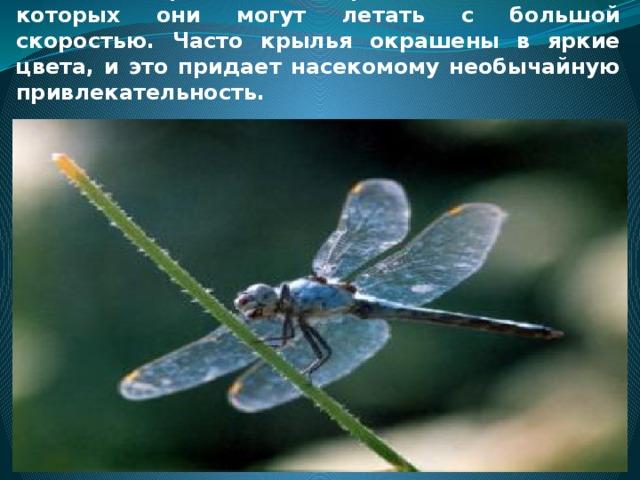 Стрекозы — это насекомые с двумя парами сильных перепончатых крыльев, с помощью которых они могут летать с большой скоростью. Часто крылья окрашены в яркие цвета, и это придает насекомому необычайную привлекательность.