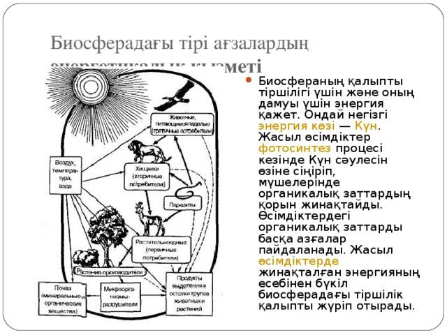 Биосферадағы тірі ағзалардың энергетикалық қызметі