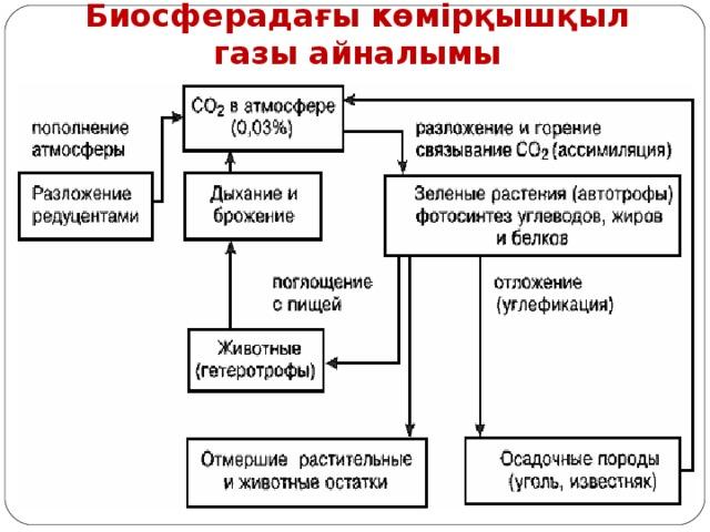 Биосферадағы көмірқышқыл газы айналымы